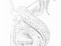 drakopangolin
