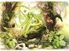 Dryade de printemps - Dryad of spring