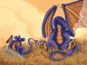 Dragoons, Etape finale